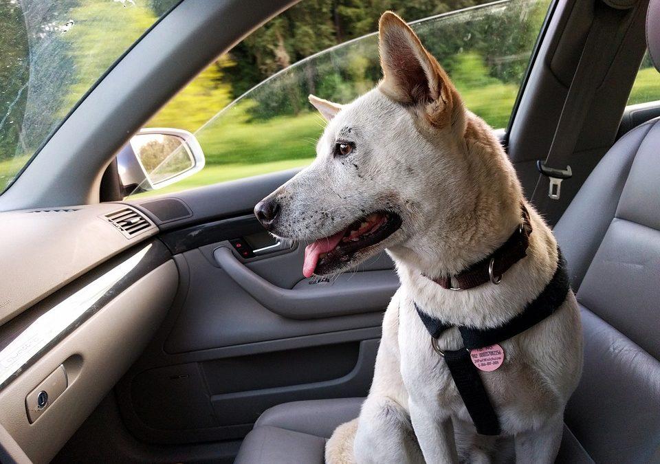 ¿Puedo ir a la cárcel por dejar al perro en el coche?