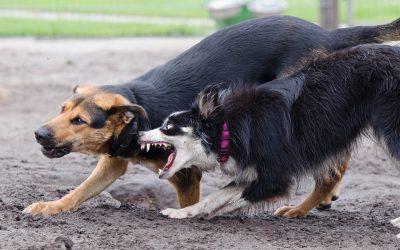 Cómo actuar legalmente ante un ataque de un perro