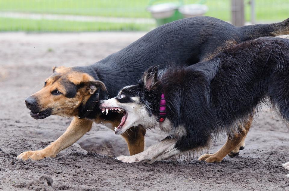 Cómo Actuar Legalmente Ante Un Ataque De Un Perro Despacho De Abogados En Zaragoza