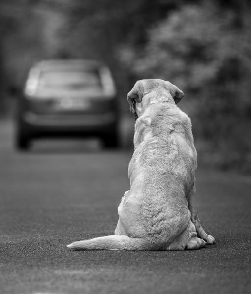 Abandonar a un animal tiene consecuencias legales graves