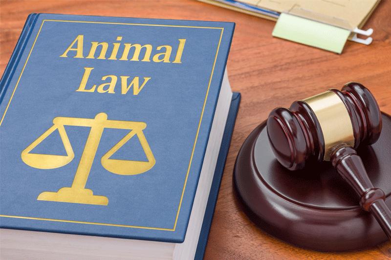 ¿Qué puedo hacer ante una negligencia veterinaria?