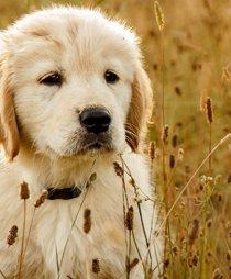 Protección animal en el Código Penal