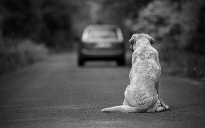 ¿Qué hago si me roban o se me pierde el perro?