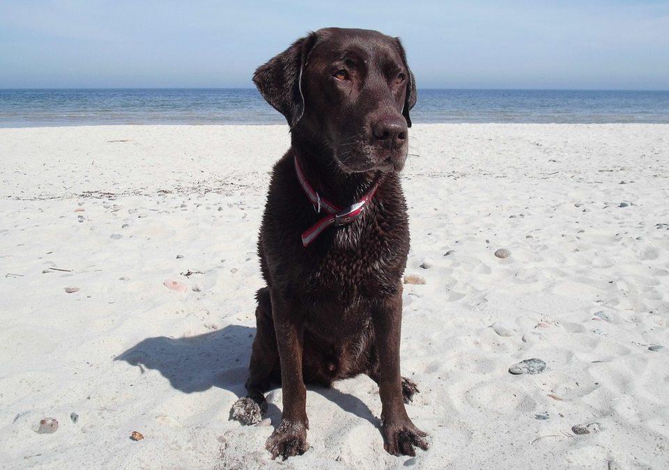 ¿Puedo llevar a mi perro a la playa?