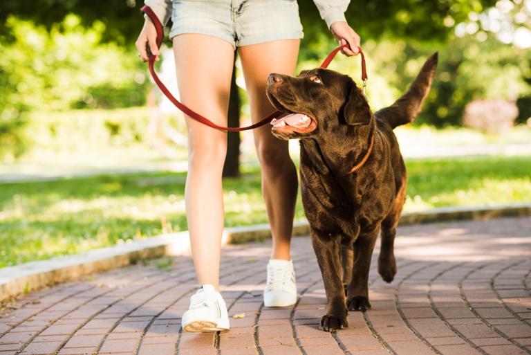 Prohibiciones y obligaciones para dueños de mascotas