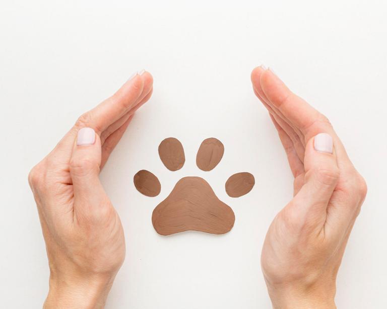 ¿Se pueden solicitar medidas cautelares ante un caso de maltrato animal?